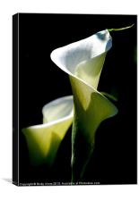 Peace Lily, Canvas Print