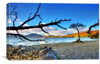 Lone  Loch Lomond Tree, Canvas Print