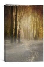 spooky misty woodland, Canvas Print