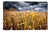 storm over wheat, Canvas Print