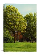 Trees are green, Canvas Print