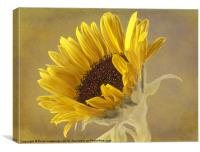 Sunflower, Canvas Print
