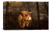 Highland Toffee Coo, Canvas Print