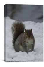 Squirrel in the snow, Canvas Print