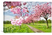The Stray in Blossom, Canvas Print