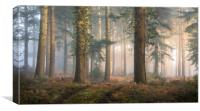 Puddletown Forest, Canvas Print