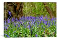 Bluebells in April, Canvas Print