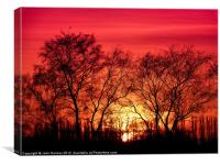 Trees in the Sunset, Canvas Print