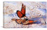 two monarchs making whoopie, Canvas Print
