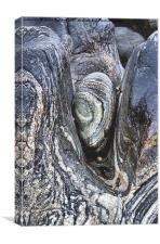 WEDGED STONE, Canvas Print