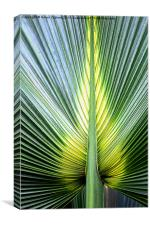 PALM LEAF, Canvas Print