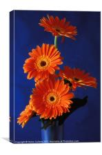ORANGE GERBERAS ON BLUE, Canvas Print