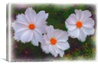 WHITE DAISIES, Canvas Print
