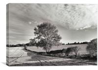 NEAR SHILLINGTON, Canvas Print