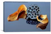 NELUMBO SEEDHEAD, Canvas Print