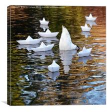 SWAN and the BOATS                               , Canvas Print