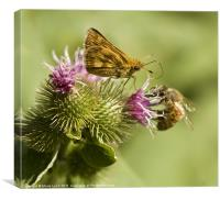 Butterfly and Bee Sharing, Canvas Print