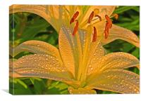 Lorie's Lilly, Canvas Print