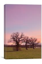 Sunset at Corsham Park, Canvas Print