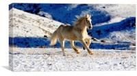 HORSE RUNNING in SNOW, Canvas Print