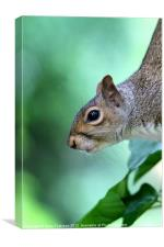 Inquisitive Squirrel 2, Canvas Print