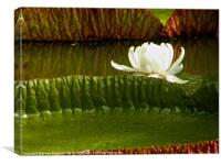 Giant Water Lilies, Canvas Print