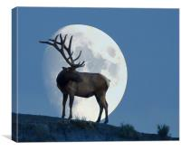 Elk And Moon, Canvas Print