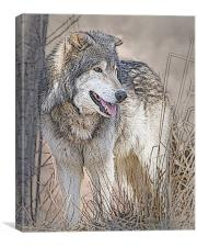 Wolf By Tree, Canvas Print