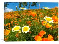 California Poppies, Olympic Park, London, Canvas Print