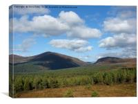 Glenmore, Cairngorms National Park                , Canvas Print