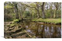 Mill lawn Brook near Puttles Bridge in the New For, Canvas Print