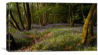 Bluebells at the Scrubs near Southend on Sea, Canvas Print
