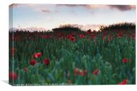 Field of Poppies near Dorchester, Canvas Print