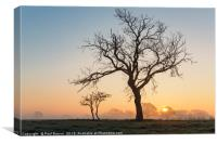 Tree in winter at Sunrise, Canvas Print