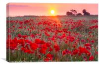 Sunrise over a sea of Poppies , Canvas Print