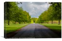 Avenue of trees at Lamer tree, Canvas Print
