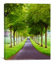 Avenue of Trees ar More Crichel, Canvas Print