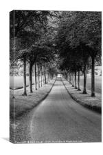Avenue of Trees ar More Crichel in Clack and White, Canvas Print