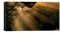 Sunrays in the Morning, Canvas Print