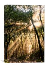 Blinded by The Light, Canvas Print