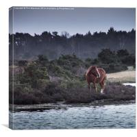 New Forest Pony, Canvas Print