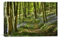 Bluebells and Beech, Canvas Print
