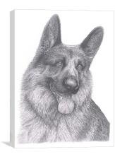 German Shepherd, Canvas Print