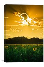 Under Skies Of Gold, Canvas Print