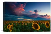 Skies Of A Summer Sunset, Canvas Print