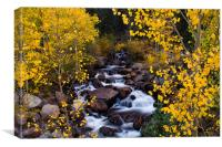The River Of Gold, Canvas Print