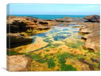 Manly Beach Rockpools, Canvas Print