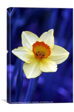 Yellow Daffodil on Blue Background, Canvas Print