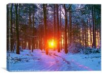 Winter Sunrise In The Forest, Canvas Print