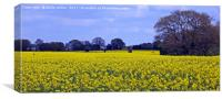 Fields Of Rapeseed, Canvas Print